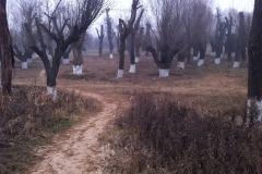 Xianease_Dec_Hash_Run_2012-12-15_003